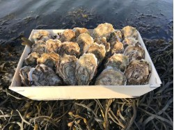 Huîtres creuses Calibre 4